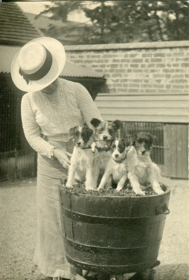 edwardian puppies003